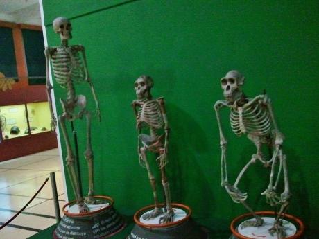 Hominid bone
